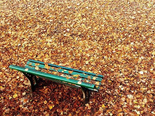 http://cultivandoelegancia.files.wordpress.com/2010/10/folhas-secas.jpg